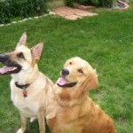 Dog Training Tips – How to Handle a Timid Older Dog