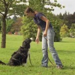 5 Essential Dog Training Tips