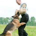 Dog Training For Aggressive Dogs – 3 Tips To Curb Your Dog's Aggression