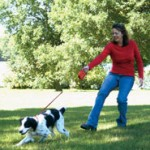 Best Effective Dog Training Tips