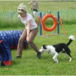 Secrets to Dog Training Guide – What Can You Learn From It?
